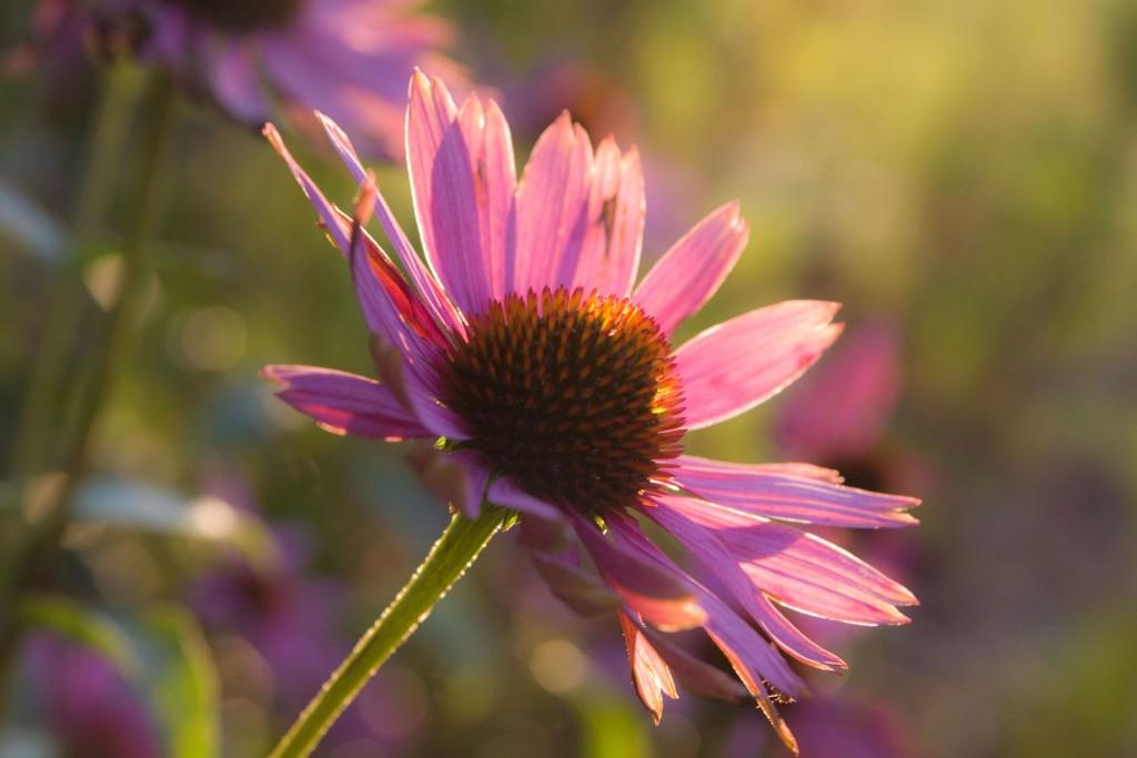 Blume im Hof